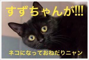 明星チャルメニャ(バリカタ麺)マー油豚骨のカロリーと発売日は!1